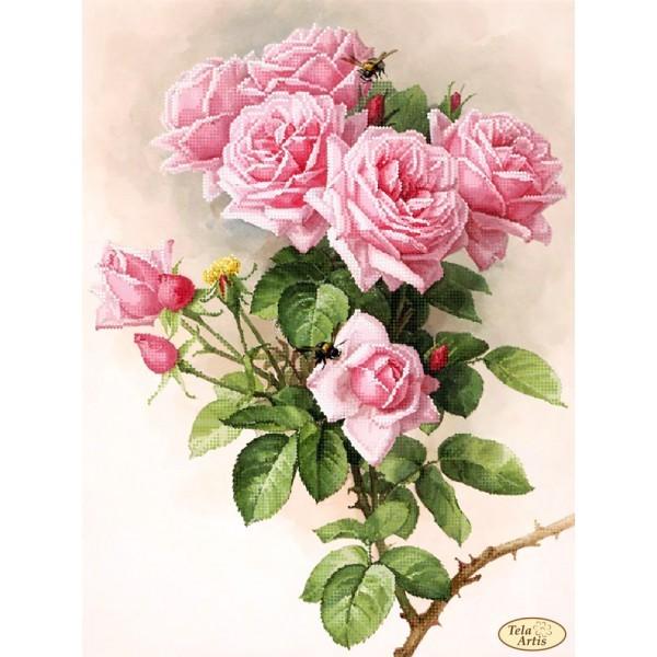 Набор Английские розы