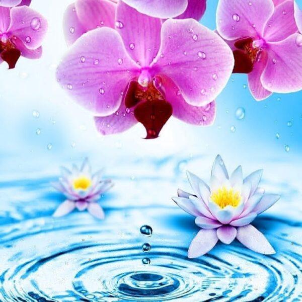 Отдушка Лотос с орхидеей