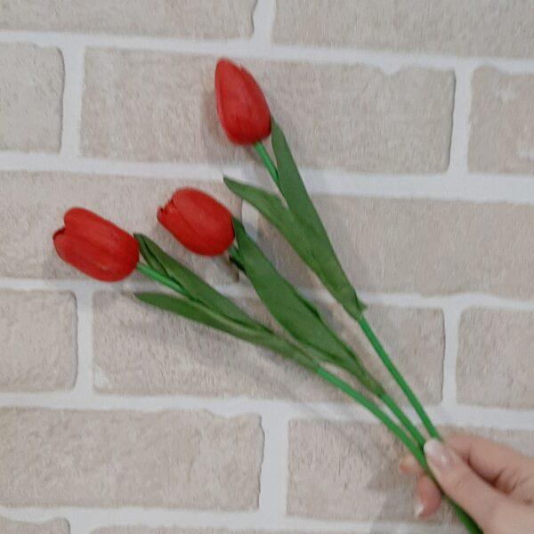 Тюльпан одиночный
