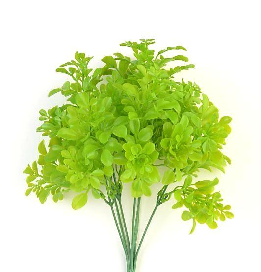 Куст Фиджак зеленый