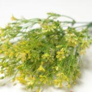 Куст Валонь (мелко цвет. желт) (2)