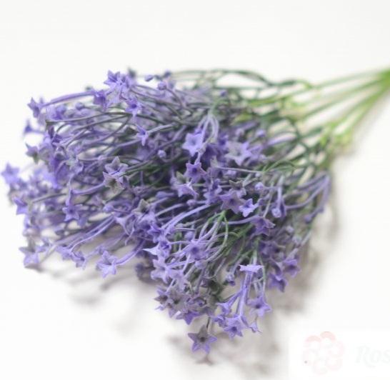Куст Аверм фиолетов.